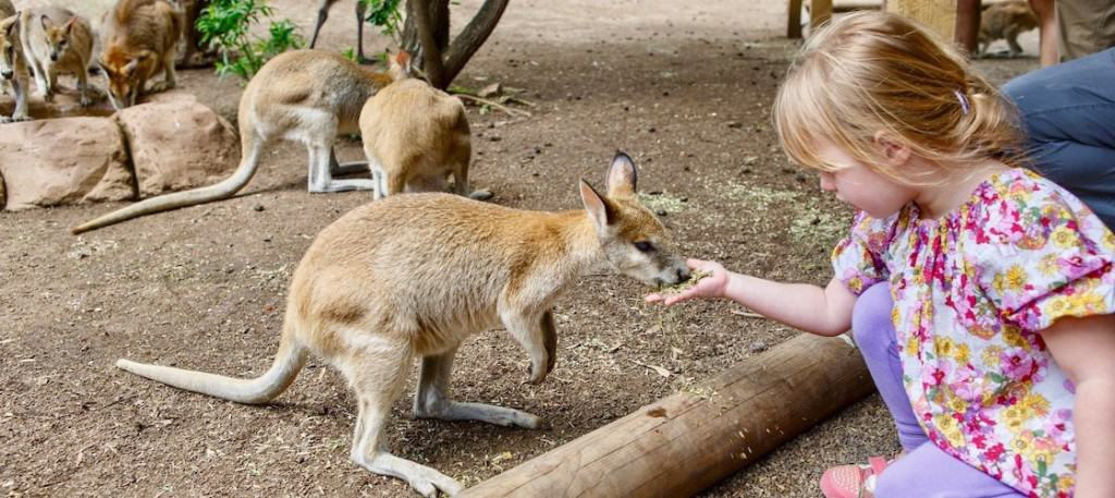 Featherdale Wildlife Park - School holiday activities Sydney