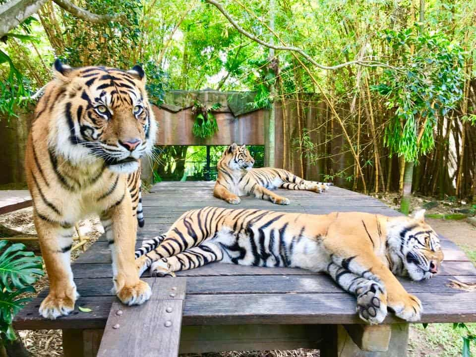 Best Zoos in Australia - Australia Zoo