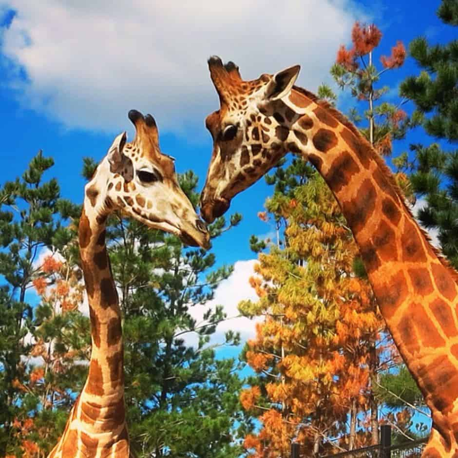 Best Zoos in Australia - National Zoo and Aquarium