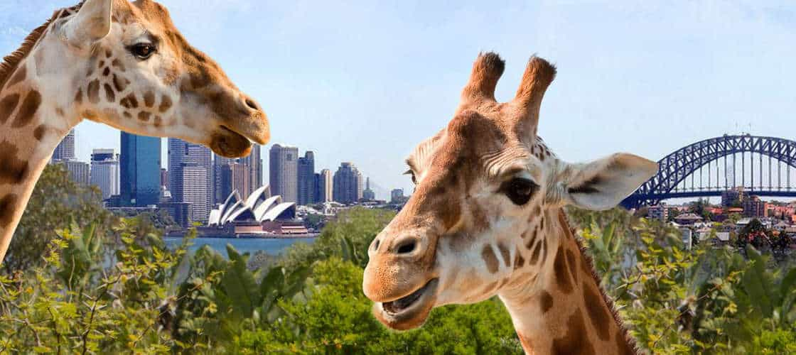 Best Zoos in Australia - Taronga Zoo