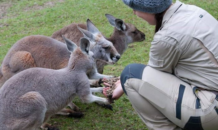 Best Zoos in Australia - Warrawong Wildlife Sanctuary
