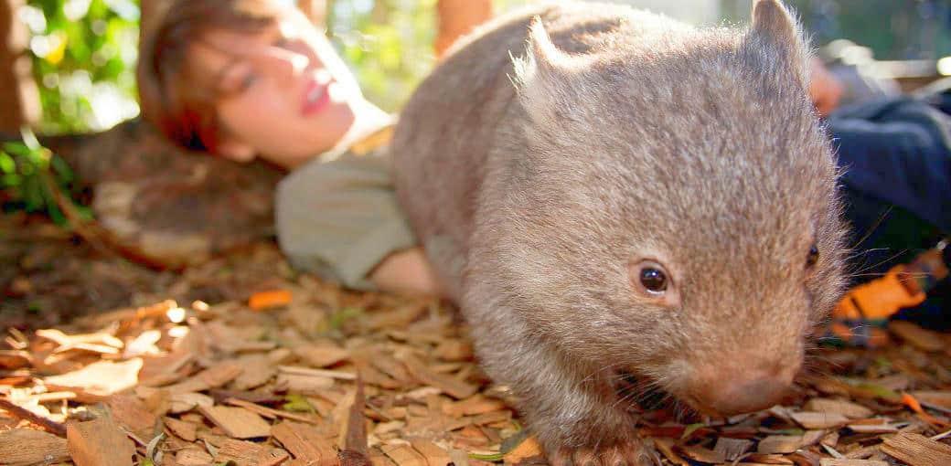Best Zoos in Australia -Wild Life Sydney