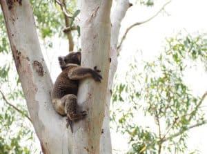 Australia Day Adelaide