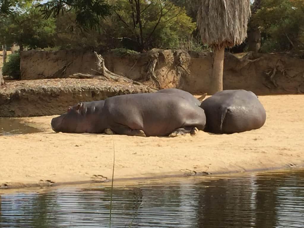 Cheap Werribee Zoo tickets
