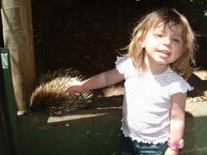 Patting an Echidna at Adelaide Zoo