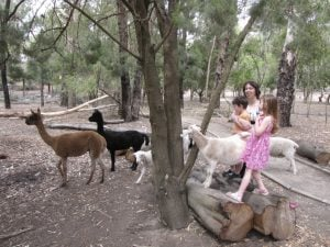 The Big Rocking Horse Animal Park