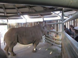 Rhino Keeper Talk at Monarto Zoo