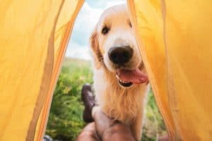 dog friendly camping victoria