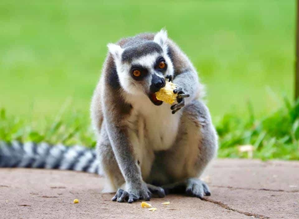 Animal Experiences Brisbane
